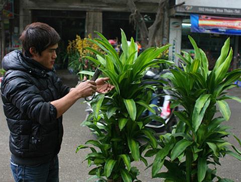 Thiết mộc lan có thể hấp thu khí toluene trong nhà. Ảnh: Kienthuc.